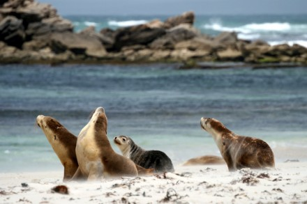 Seal Bay Conservation Park, Kangaroo Island, South Australia